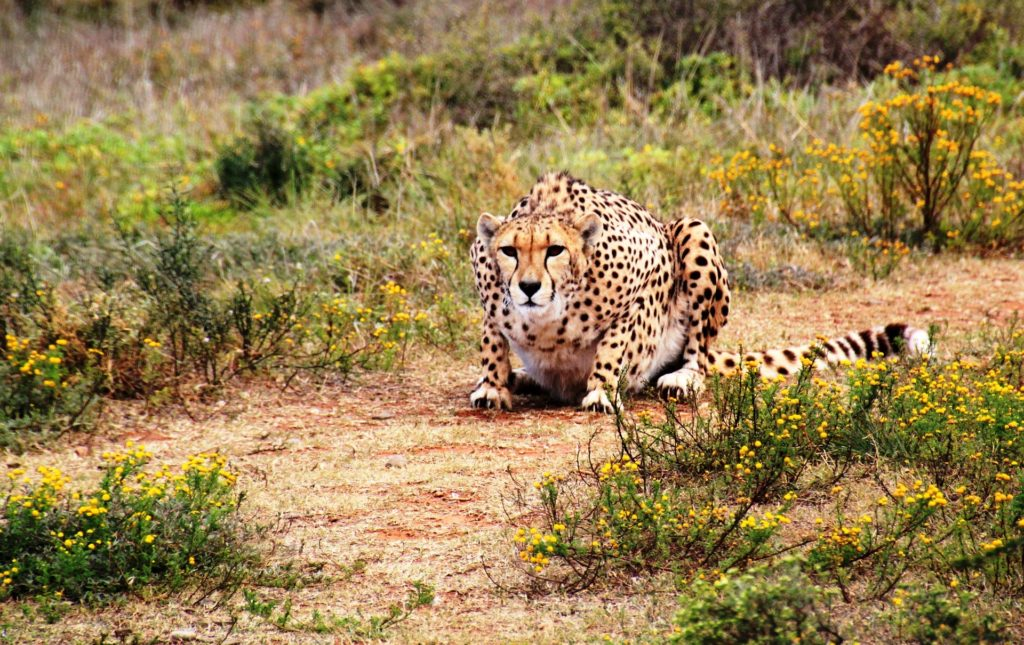 Best National Parks In South Africa | Discover South Africa