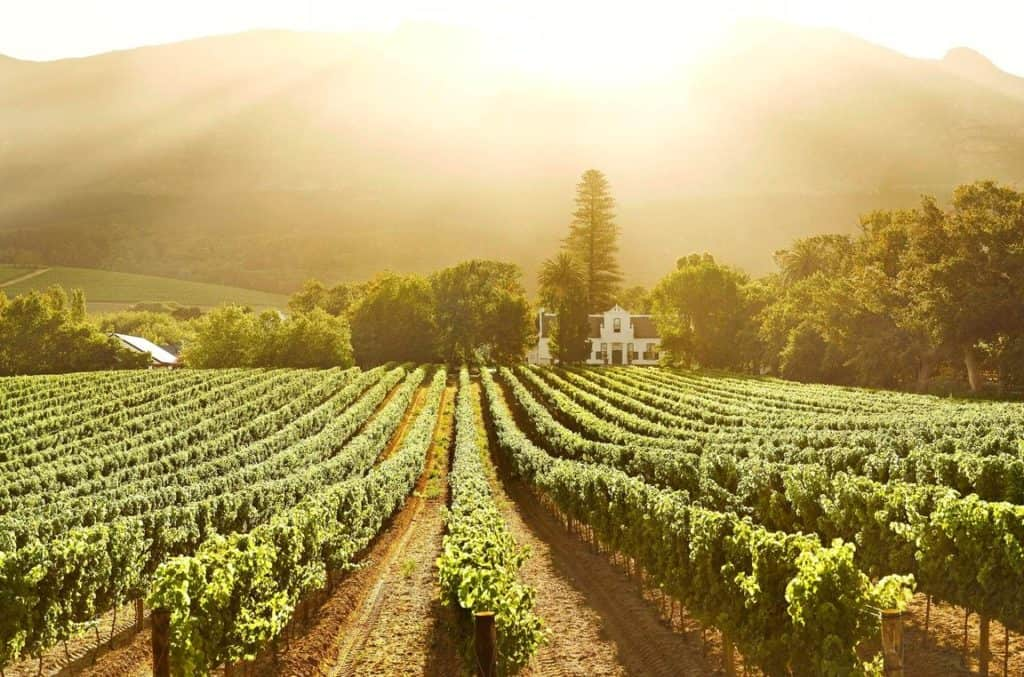 Buitenverwachting Wine Farm   The Best Of South Africa's Western Cape Wine Farms   Discover South Africa