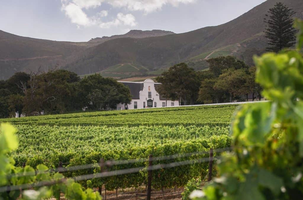 Groot Constantia   The Best Of South Africa's Western Cape Wine Farms   Discover South Africa